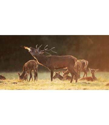 Rando avec un âne, sur les traces du cerf_Out Of Reach
