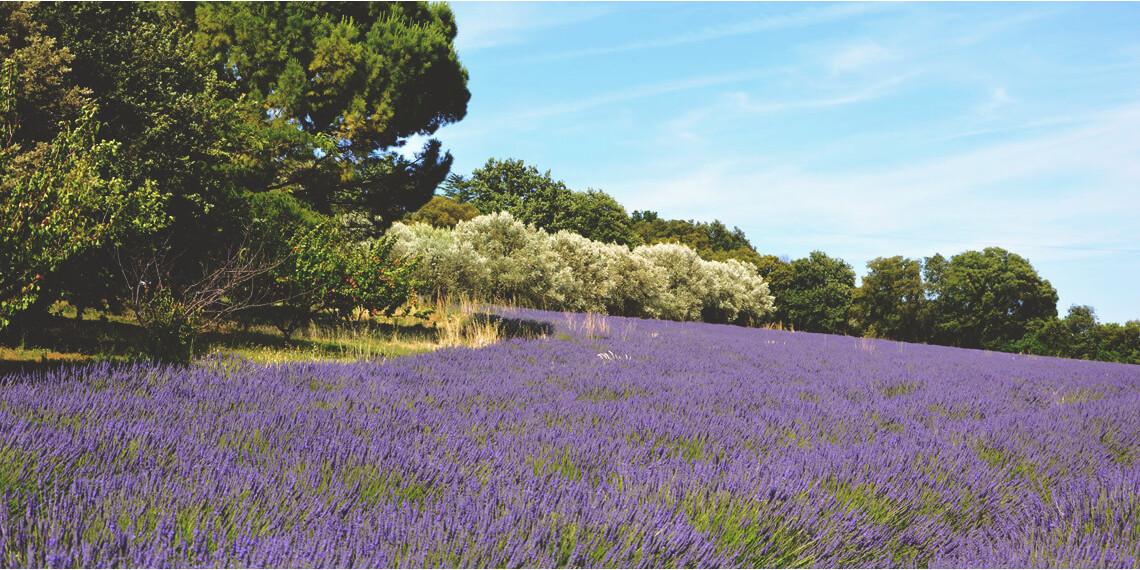 Drôme Sud Provence