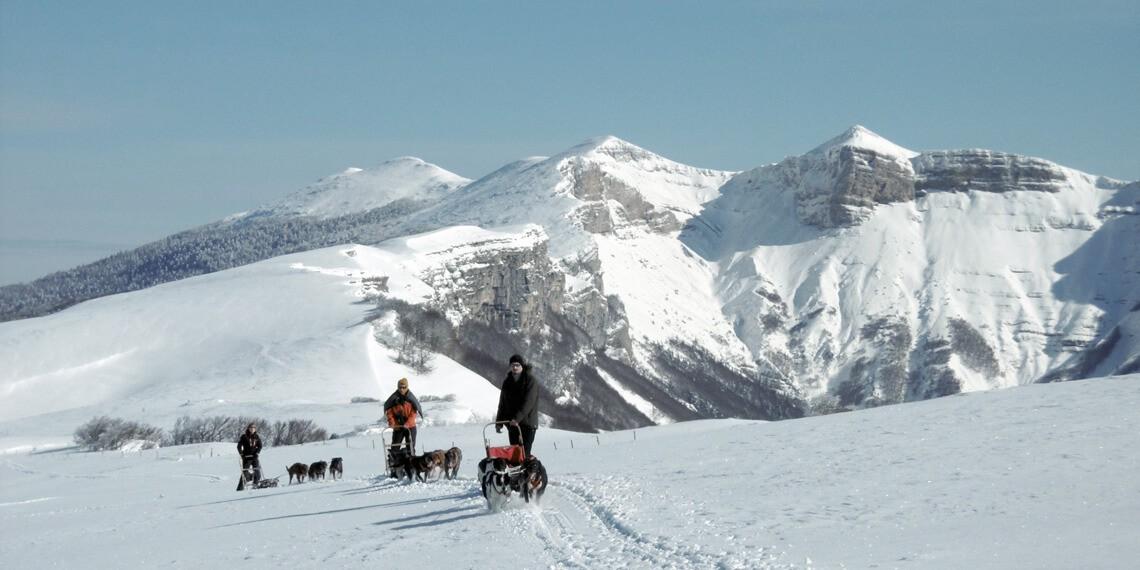 Chiens de traineau et canirando en Savoie et Vercors