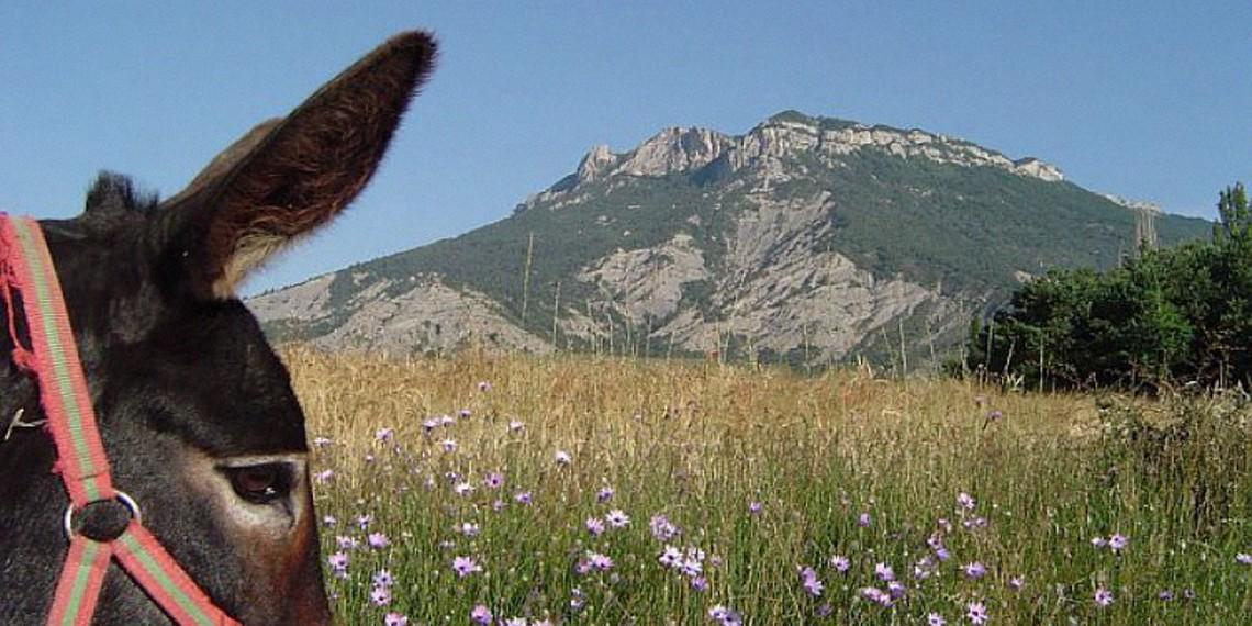 Randonnée avec un âne en Provence, labellisée Out Of Reach