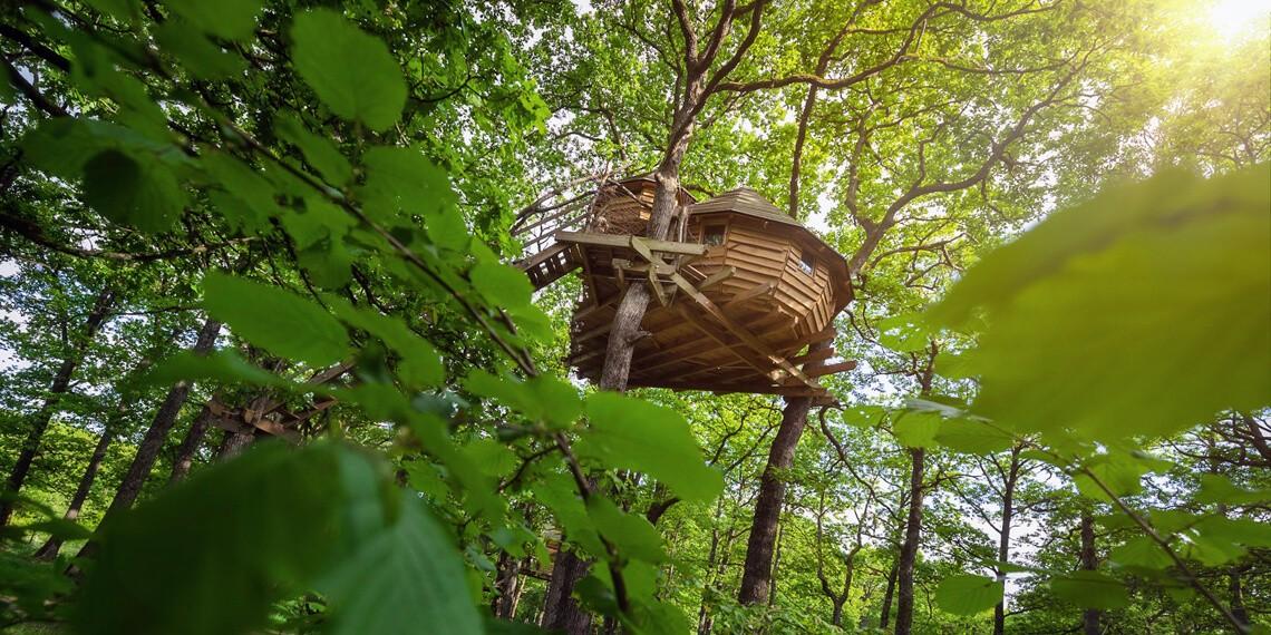 Cabanes dans les arbres dans les Vosges, labellisées Out of Reach