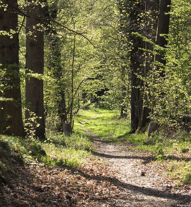Sentier de forêt déconnecté