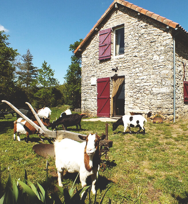 La maison isolée avec ses chèvres, ça déconnecte