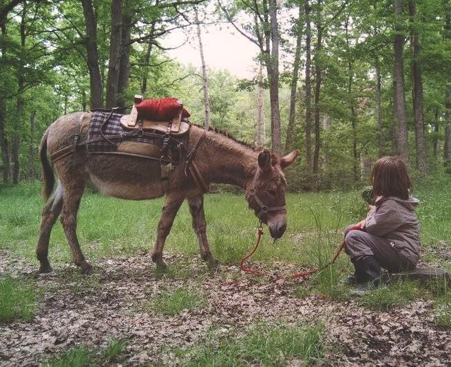 Rando âne dans la forêt en Solog
