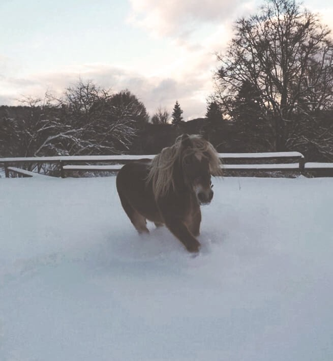 Cheval dans la neige du Jura