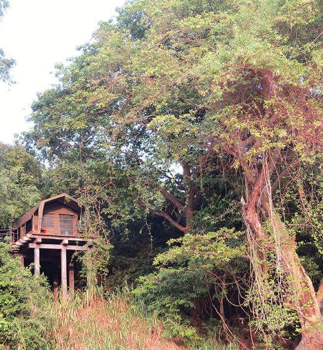 Sri Lanka : la nature à l'état pur - 3