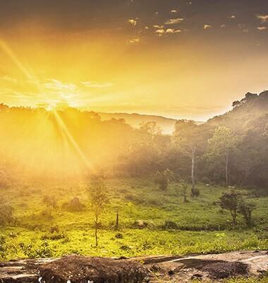 Oasis paradisiaque au Sri...