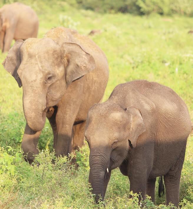 Oasis paradisiaque au Sri Lanka - 2