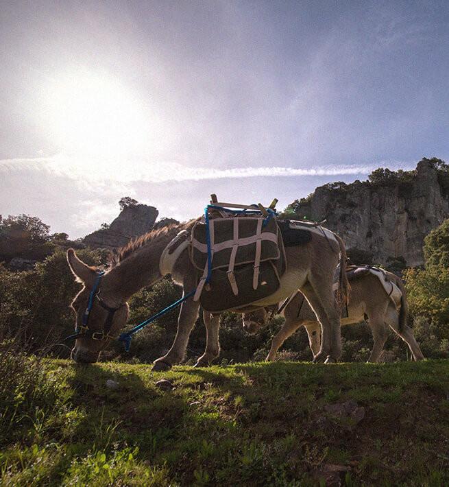 Trek en Sard'ânes dans l'Ogliastra - 2