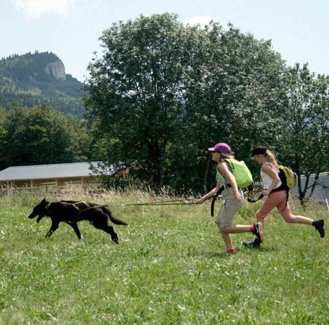Rencontre avec des chiens de traîneau - 2