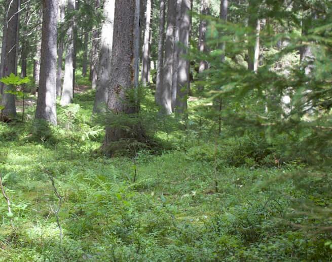 Goûter sauvage au coeur de la forêt, en famille - 1