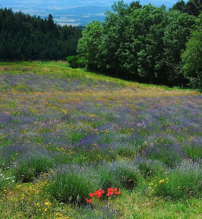 Débranchez au cœur de l'Auvergne - 3