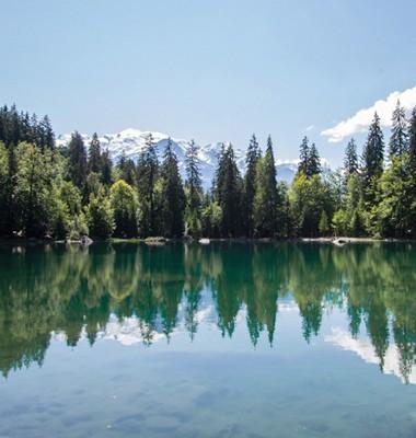 Nuit dans une cabane dans les arbres et bain de forêt face au Mont Blanc