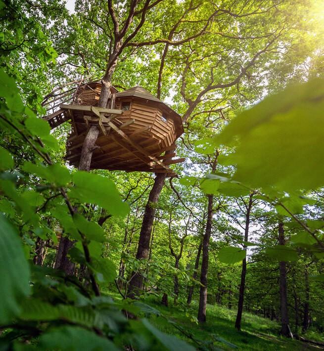 Cabanes fantastiques en pleine forêt vosgienne - 2